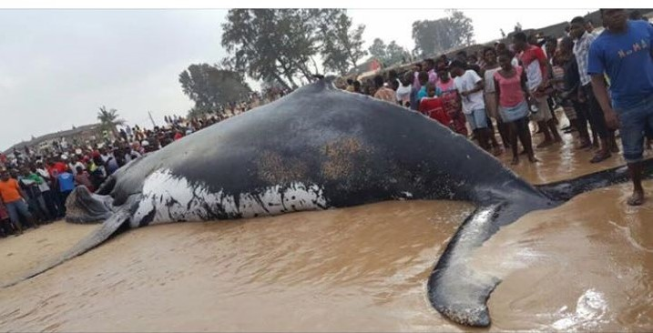 whole whale beached